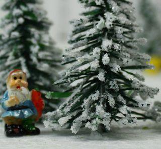 218-040X Snowy Evergree -21