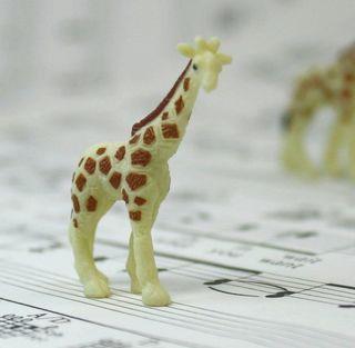 234-2622 Baby Giraffes-10