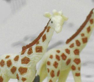 234-2622 Baby Giraffes-04